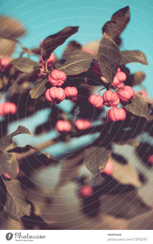 Sky Nature City Plant Green Beautiful Leaf Blossom Autumn Style Moody Pink Field Illuminate Elegant Bushes