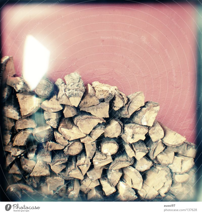 Tree Wood Concentrate Analog Frame Climate change Branchage Haircut Viewfinder Focal point Firewood Bordered Saw Lightshaft
