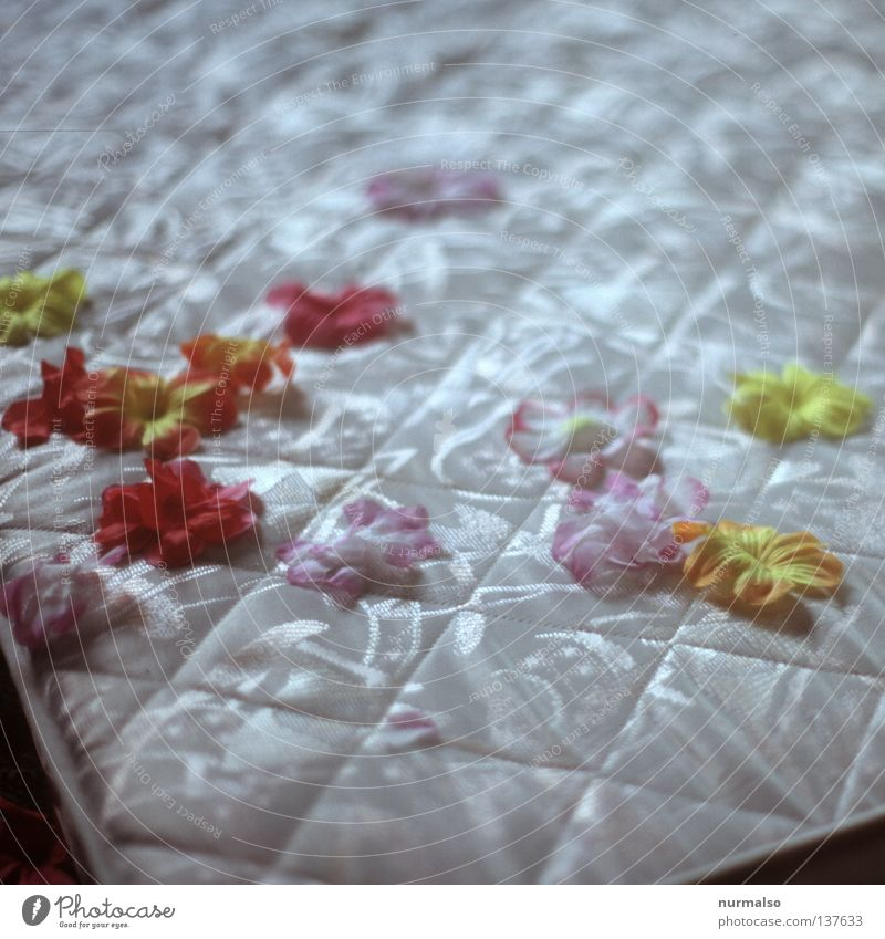 midday nap Bed Sleep Mat Artificial flowers Dream Fine Places Cave Pattern Dream world Metal coil Foam rubber Goose Nightmare Perspiration Leisure and hobbies