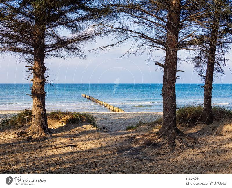Baltic coast Relaxation Vacation & Travel Beach Ocean Nature Landscape Water Clouds Tree Coast Baltic Sea Wood Blue Romance Idyll Tourism groynes Dune Sky