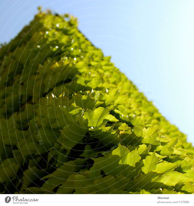 Sky Nature Blue Green Plant Leaf House (Residential Structure) Wall (building) Above Architecture Building Wall (barrier) Closed Multiple Wild animal