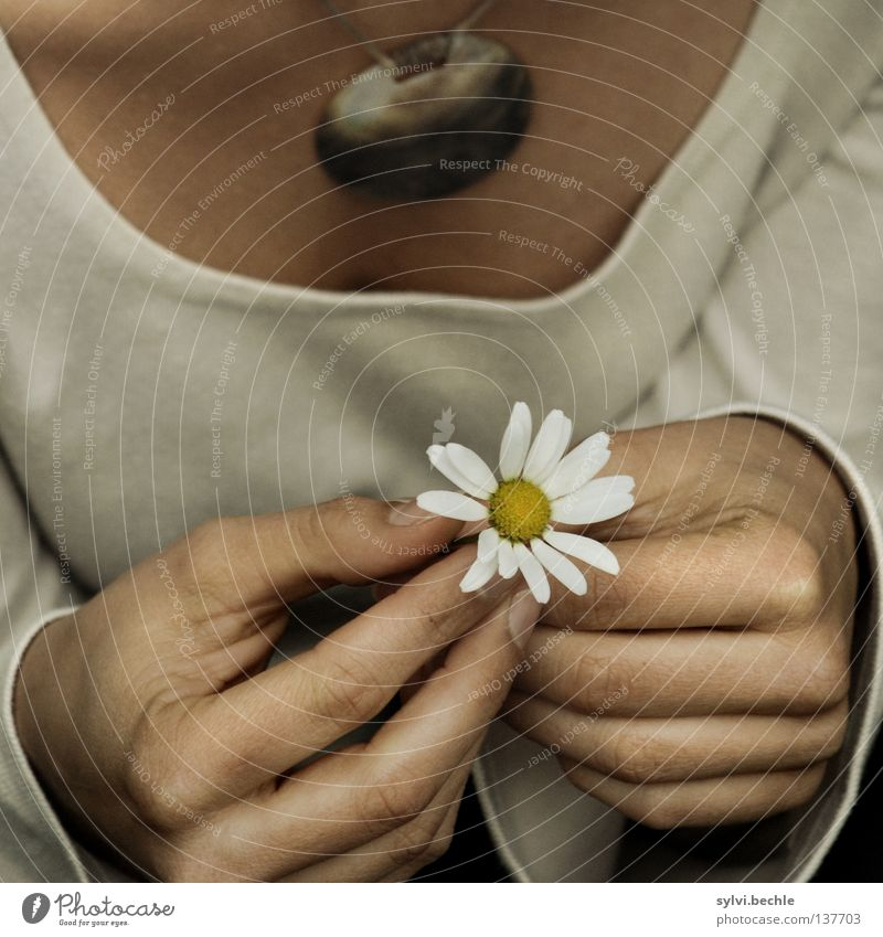 Woman Hand White Beautiful Summer Flower Adults Life Blossom Small Dream Brown Wait Beginning Search Hope