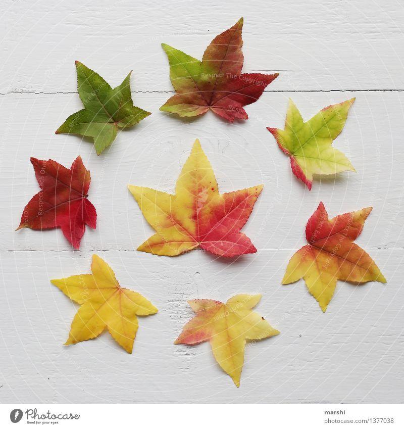 Nature Plant Green Red Leaf Yellow Autumn Garden Moody Round Still Life Autumnal Super Still Life