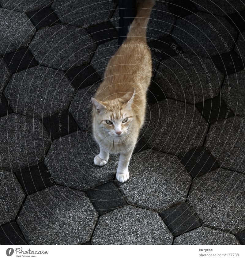 Red Calm Loneliness Black Relaxation Gray Cat Orange Contentment Dangerous Floor covering Stripe Threat Ear Observe Pelt