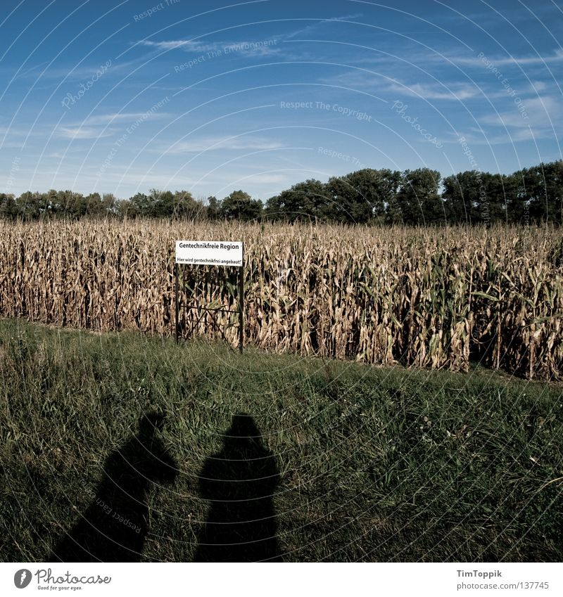 GMO-free region Green Genetic engineering Field Agriculture Nutrition Corn cultivation Rural Monoculture Sky Maize Lawn Signs and labeling Shadow Gene sequence