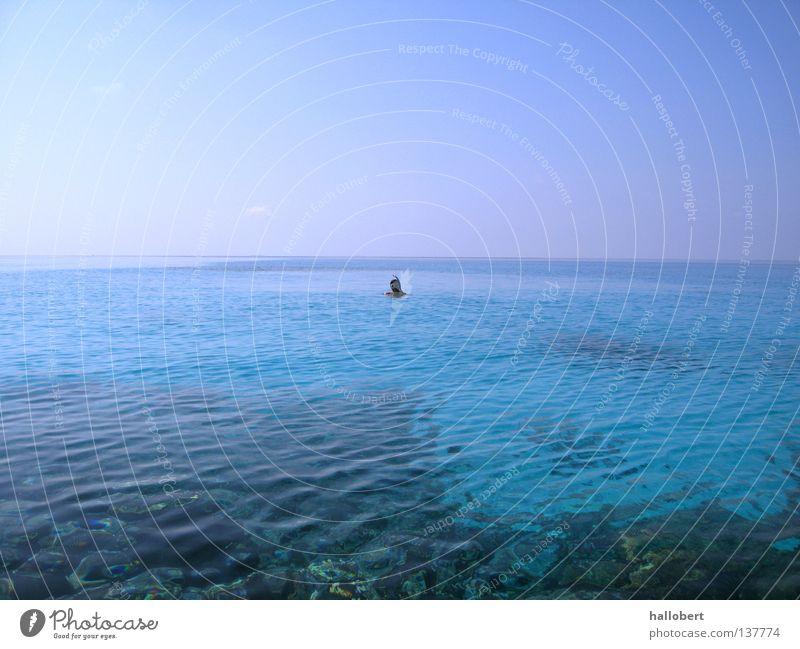 Water Ocean Dive Maldives Reef Snorkeling