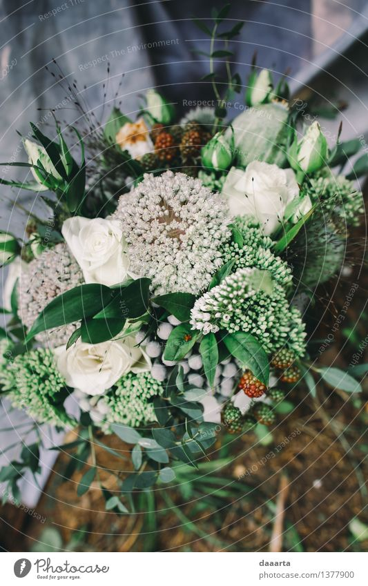 wedding bouquette 2 Nature Plant Summer Flower Joy Forest Environment Life Emotions Grass Feminine Style Lifestyle Freedom Moody Design