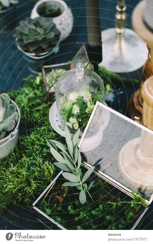 table setting Lifestyle Elegant Style Design Harmonious Relaxation Leisure and hobbies Adventure Freedom Summer Table Event Nature Plant Drops of water Grass