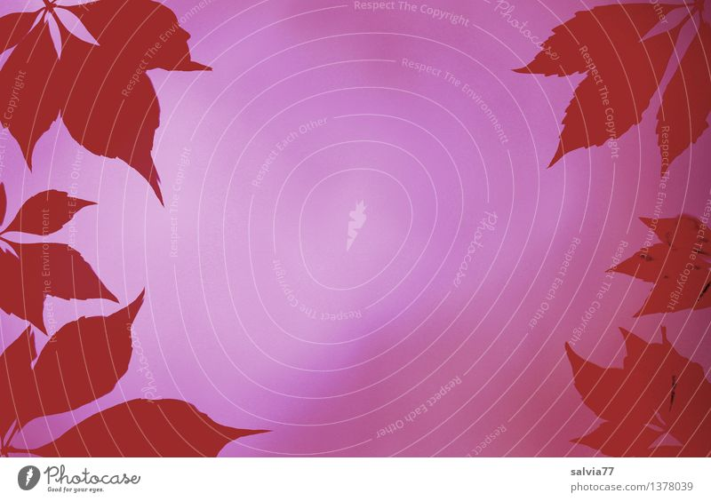 Relaxation Red Leaf Autumn Background picture Moody Pink Design Perspective Hope Wellness Violet Belief Harmonious Frame Senses