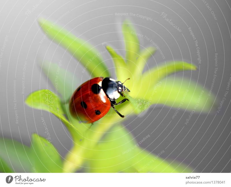 Away to happiness? Nature Plant Animal Spring Summer Foliage plant Beetle Ladybird Seven-spot ladybird Insect 1 Crawl Esthetic Free Friendliness Happiness Fresh