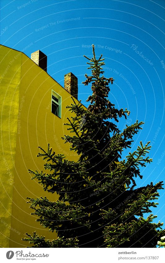 Sky Blue Green Tree House (Residential Structure) Window Park Facade Christmas tree Chimney Town house (City: Block of flats) Sky blue Coniferous trees Spruce