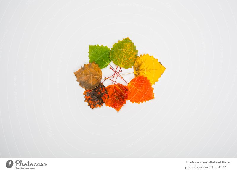Nature Old Green Red Leaf Black Yellow Life Autumn Brown Orange Gold Circle New 7 Cycle