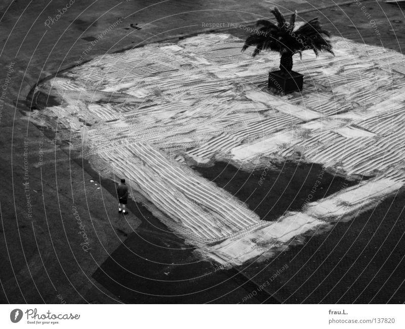 Man City Summer Vacation & Travel Beach Street Sand Coast Places Information Gastronomy Palm tree Marvel