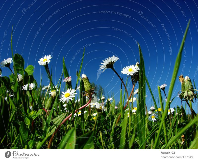 Nature Beautiful Sky White Flower Green Blue Plant Summer Calm Yellow Colour Relaxation Meadow Emotions Blossom