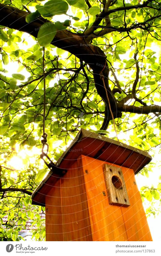 Spring is here! Tree Birdhouse Wood Brown Green Light Physics Fresh Force Orange Bright Warmth Protection Infancy