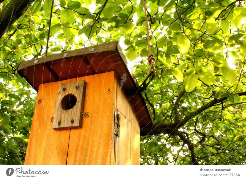 Tree Green Spring Wood Warmth Brown Bright Orange Bird Force Fresh Protection Physics Infancy Birdhouse
