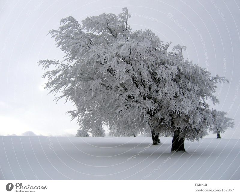 Tree Winter Dark Cold Snow Landscape Ice Fog