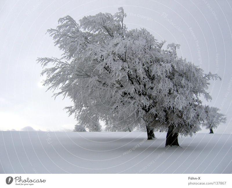 winter atmosphere Tree Winter Cold Dark Fog Snow Ice Landscape