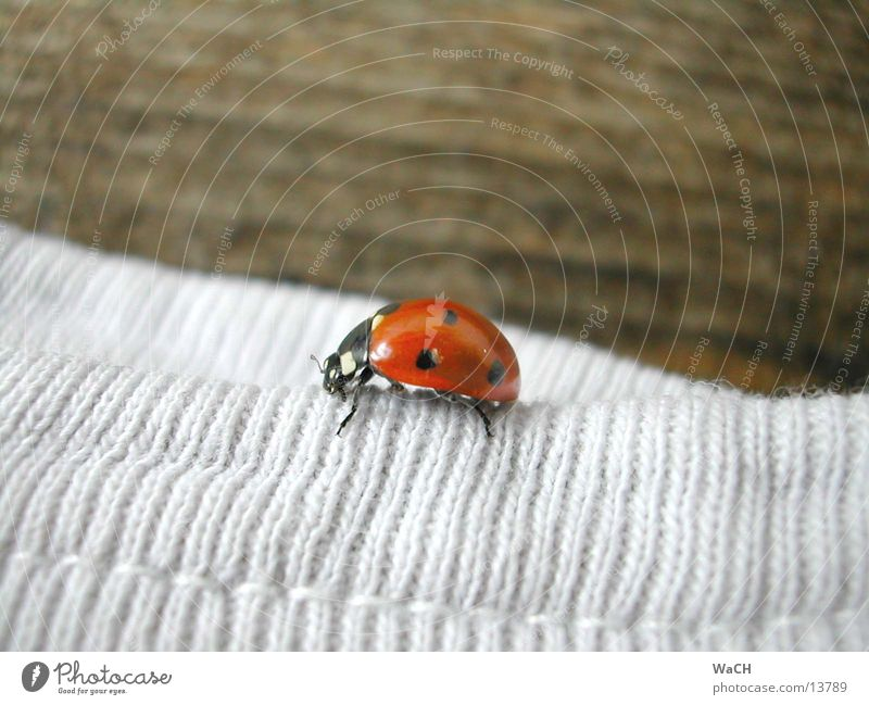 Nature Red Summer Spring Garden Wood Park Flying Corner Insect Point Cloth Edge Ladybird Beetle Crawl