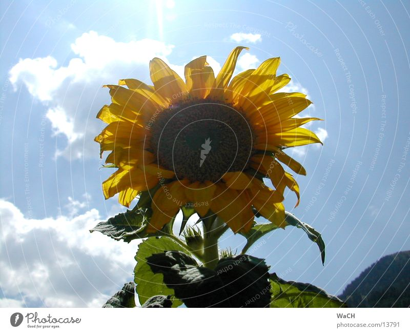 Sky Sun Flower Red Summer Leaf Clouds Yellow Spring Orange Bird Sunflower Sunflower seed