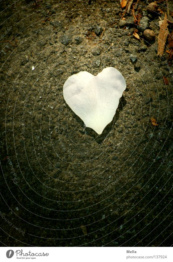 sweetheart Leaf Light Planning White Pink Blossom Blossom leave Dog rose Relationship Matrimony Like Love Point of light Dark Asphalt Obscure Stone Minerals
