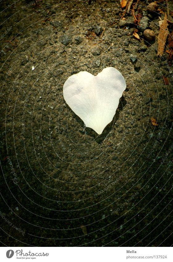 White Leaf Love Dark Blossom Lanes & trails Stone Bright Heart Pink Lie Planning Asphalt To fall Obscure Relationship