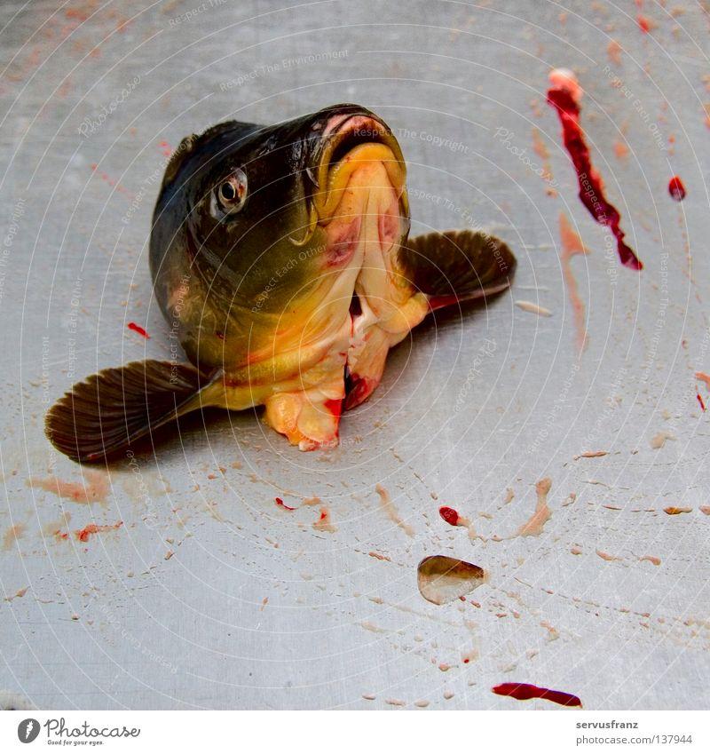 Nutrition Fish War Blood Food Battle Fish head