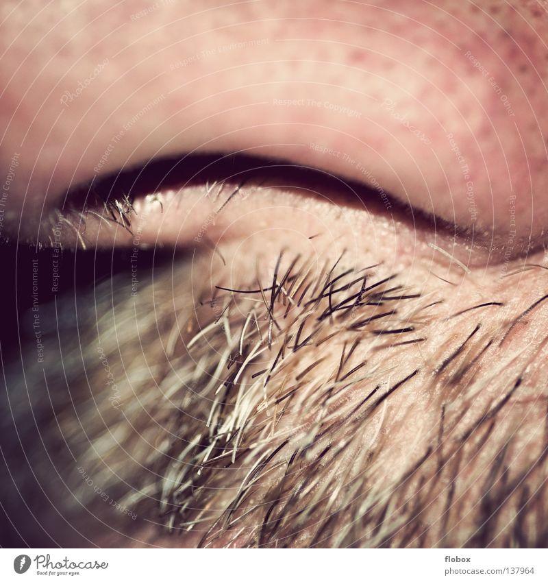 Parts VIII - End Nasal hair Odor Nostril Tip of the nose Concha Mucous membrane Air Breath Breathe Facial hair Moustache Beard hair Rough Organ Blur Soft Hard