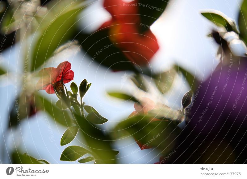 Sky White Green Blue Red Summer Flower Yellow Blossom Spring Dream Warmth Brown Lighting Fresh Bushes
