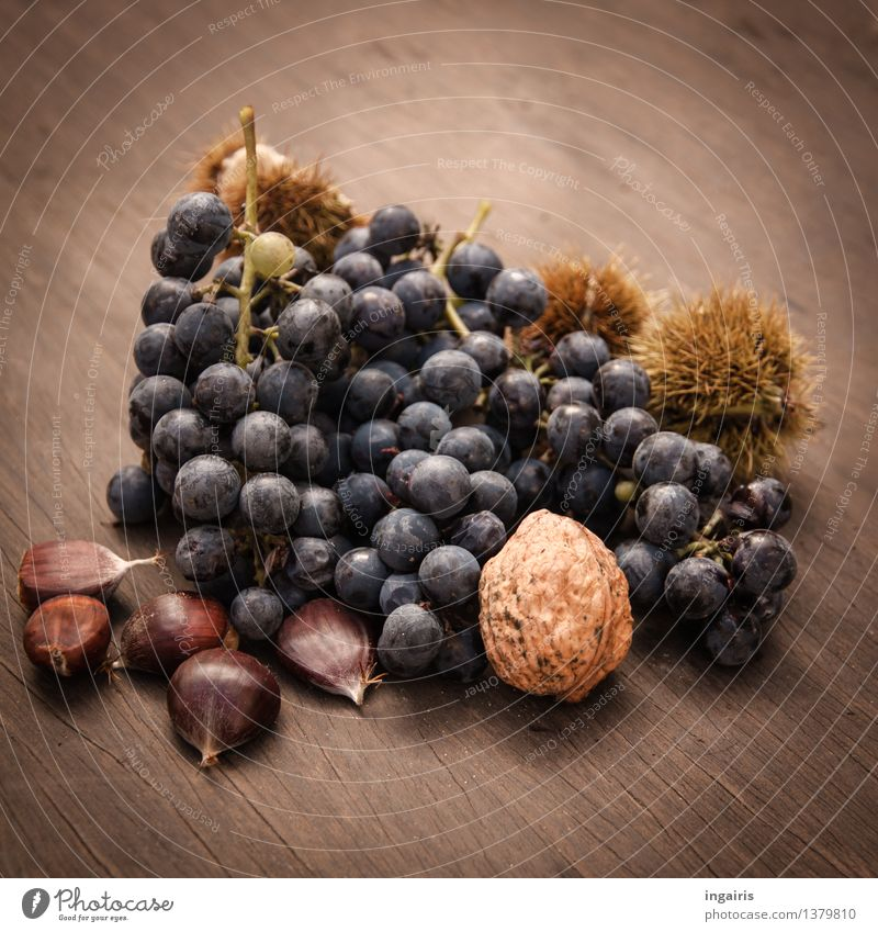 Tasty Autumn Food Fruit Bunch of grapes Sweet chestnut Walnut Plant To enjoy Lie Fresh Healthy Natural Round Juicy Thorny Blue Brown Yellow Mature Autumnal