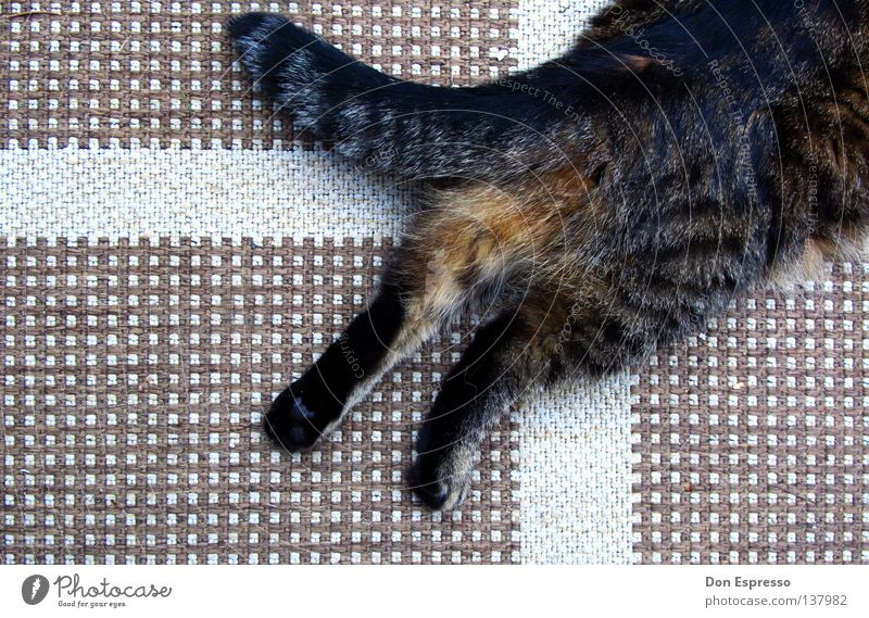 Animal Cat Back Soft Floor covering Hind quarters Pelt Mammal Paw Pet Tails Carpet Claw Domestic cat