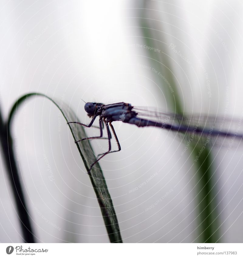Nature Summer Lake Legs Park Wait Aviation Insect Zoo Pond Dragonfly Plagues Compound eye