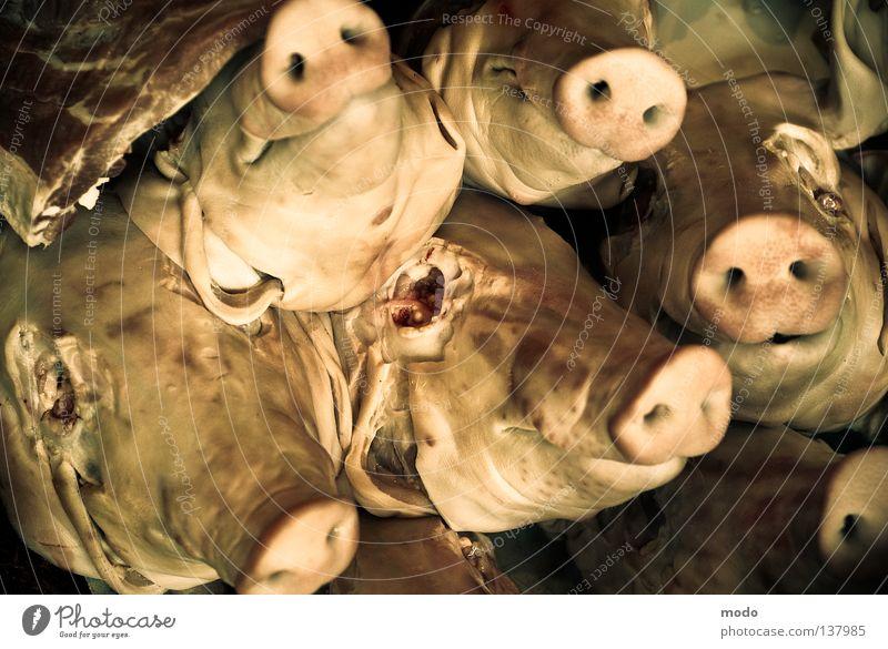 #*%pig gang! Swine Blind Animal Escalope Demonstration Socket Fear Panic Death roast pork slashed Sly fox hustled