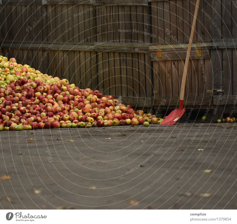 must Food Nutrition Organic produce Vegetarian diet Alcoholic drinks Autumn To enjoy Pure Quality have to cider Apple Crowd of people Many overproduction