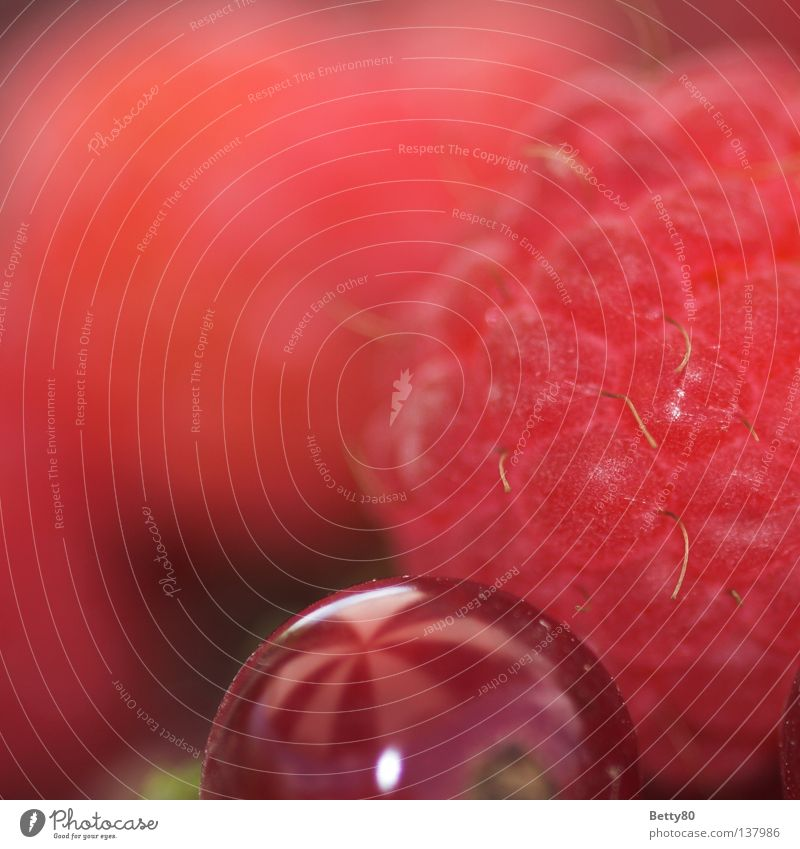 Nature Summer Plant Healthy Fruit Nutrition Sweet Berries Dessert Raspberry Edible Redcurrant