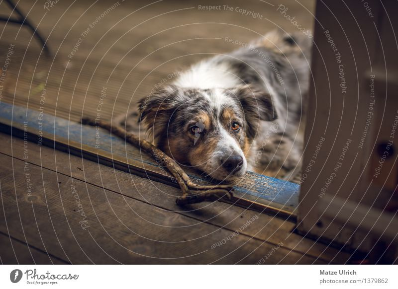Dog House (Residential Structure) Animal Playing Wood Wait Floor covering Pet Anticipation Stick Sympathy Loyalty Love of animals Retrieve