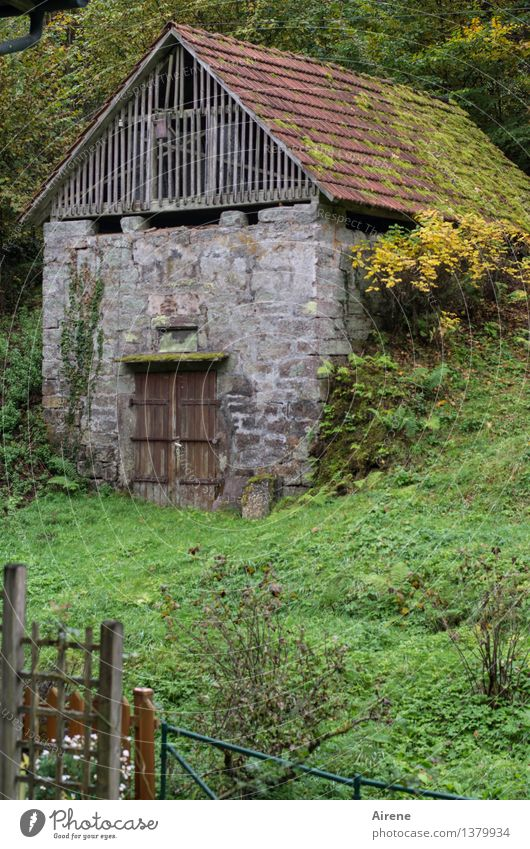 Old Green House (Residential Structure) Cold Natural Building Gray Facade Living or residing Gloomy Poverty Simple Broken Roof Protection Safety