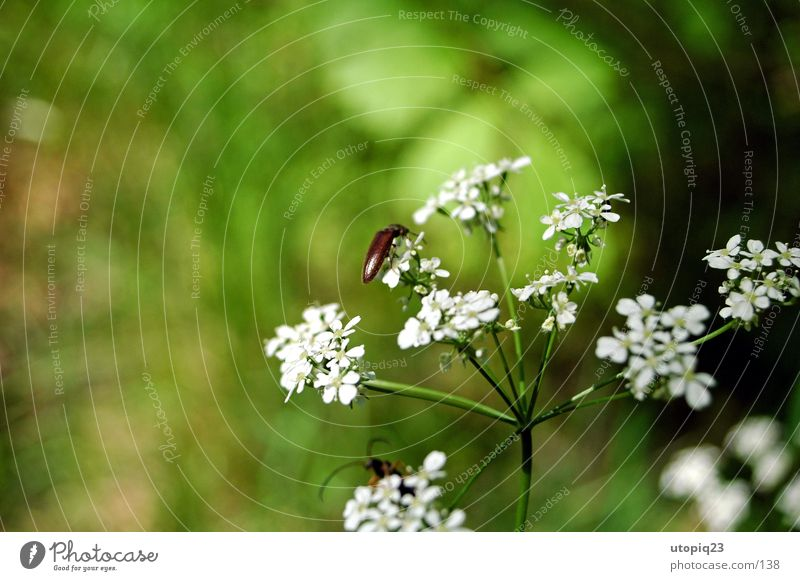 Nature Flower Green Blossom Beetle
