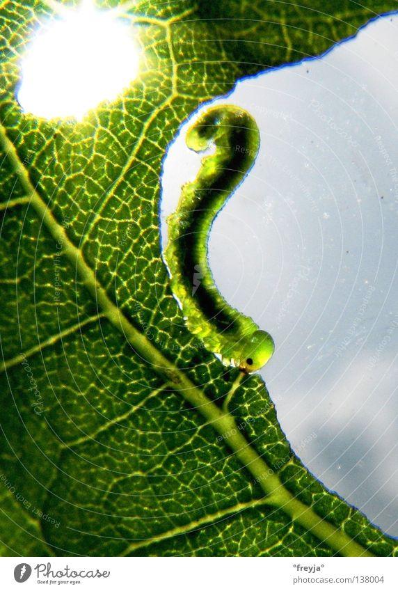 Green Sun Nutrition Butterfly Barcelona Caterpillar Casa Milà - La Pedrera