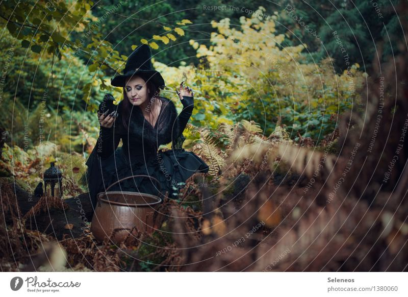 witch's brew Carnival Hallowe'en Human being Feminine Woman Adults 1 Nature Autumn Fern Forest Creepy Carnival costume Witch Witch's fire Boiler Raven birds