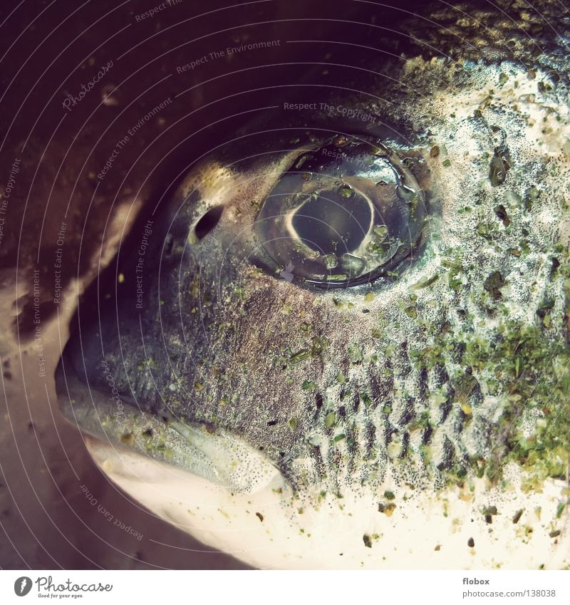 Big mouth. SECOND Gill Nutrition Food Fishery Fishing (Angle) Death Cold Green Motionless Sea water Living thing Deep frozen Fresh Fish head Seafood Ocean