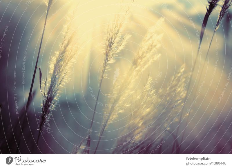 Grass in a mysterious play of light Emotions Moody Hope Grief Nostalgia Dream Transience magic of light Back-light grass fronds Illuminate Subdued colour
