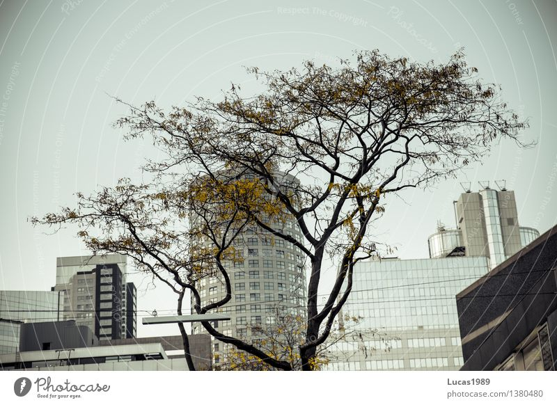 City Plant Tree Architecture Autumn Gray Facade Park High-rise Bushes Places Factory Bank building Capital city Downtown Industrial plant