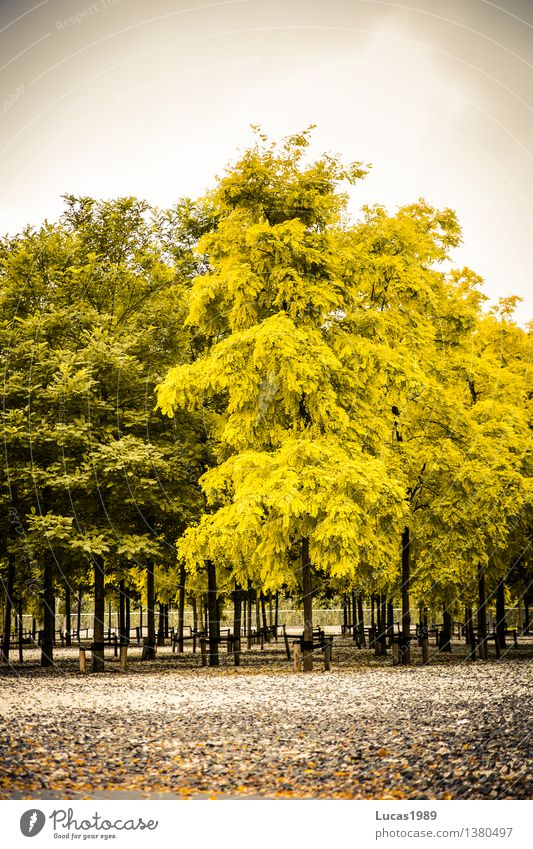 Autumn, also in the park Plant Sky Clouds Bad weather Tree Rotterdam Netherlands Town Park Yellow Gray Green Faded Difference Tree nursery Arrangement