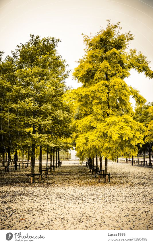Trees sorted by colour Clouds Autumn Winter Bad weather Fog Plant Leaf Foliage plant Faded Park Gravel Gravel road Places Gray Green White Arrange Arrangement