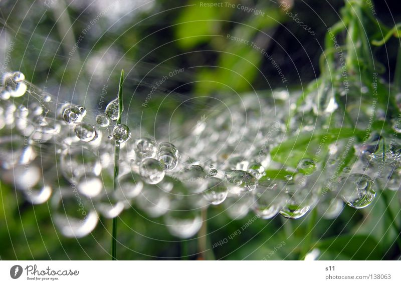 Nature Beautiful Green Plant Rain Weather Drops of water Wet Pearl Spider Sewing thread Work of art Spider's web Water