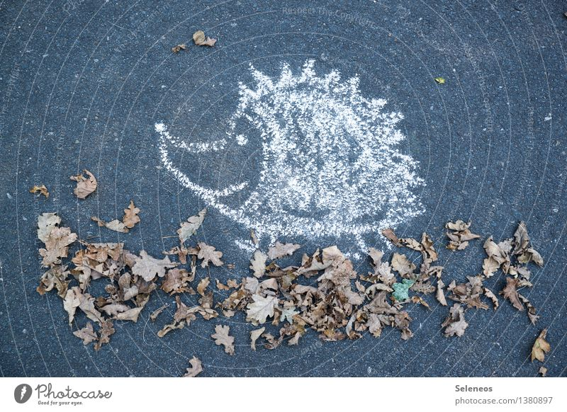 autumn walk Environment Nature Autumn Leaf Animal Hedgehog 1 Chalk Happiness To go for a walk Colour photo Exterior shot