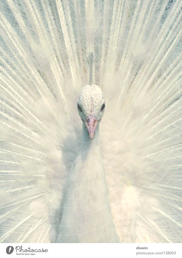 Innocence Elegant Style Beautiful Nature Animal Park Bird Animal face Zoo 1 Observe Dream Esthetic Exceptional Exotic Cold Positive Clean White Pride Pure