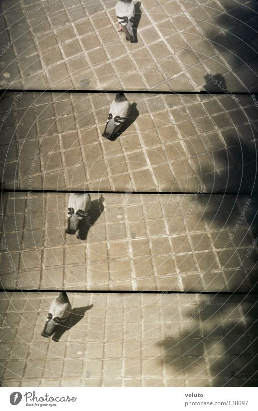 lomopigeon Recommendation Pigeon Lomography lomografia pichon piccione street