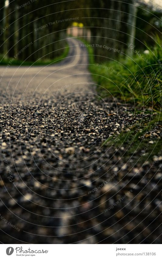 road holding Avenue Worm's-eye view Traffic lane Driving Grass Edge Pavement Roadside Tar Blur In transit Transport Traffic infrastructure Floor covering Curve